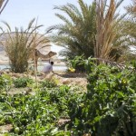 Taziry Ecolodge - Oasis de Siwa 10