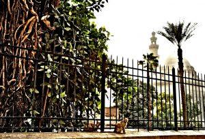 Midan Salah Ad-Din, El Cairo. Foto Alberto Fernández de Agirre
